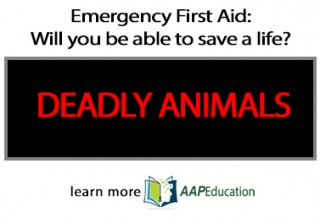 Emergency First Aid: having the skills to save a life